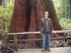 Me, by a big tree at Otway Fly